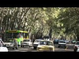 تهران شهری که چنارهایش رااز دست می دهد