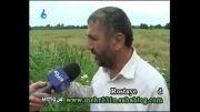 دانلود مصاحبه مشکلات روستا دافچاه از زبان کشاورزان این روستا