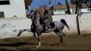 اسب باهوش وزیبا