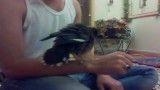 مرغ مینایی که اسمش بتوله (بتول)
