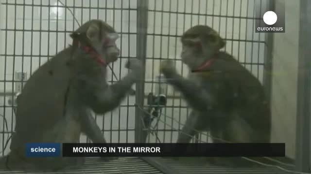 توانایی تشخیص «خود» نزد میمونها