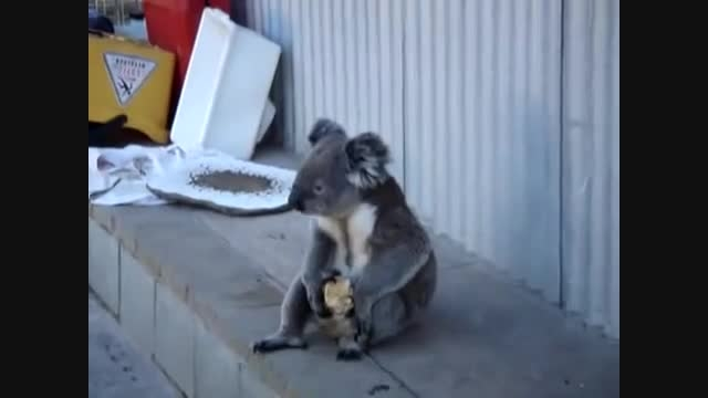 تنها ترین و بیچاره ترین و مظلوم ترین حیوان دنیا