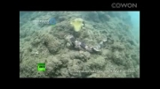 کشف حیوان عجیبی که اعماق دریا قدم می زند!