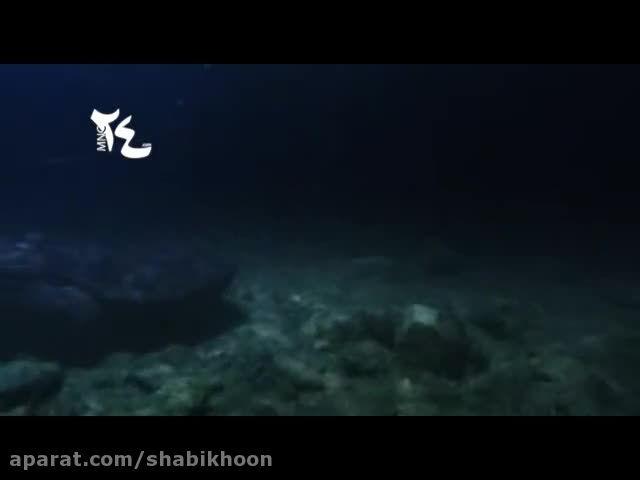 صحنه هایی زیبا و جذاب از تلاش خرس برای شکار ماهی
