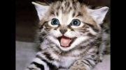 زیباترین موسیقی مخصوص گربه ها!