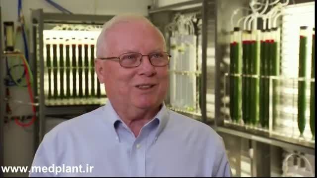 فیلم پرورش جلبک برای تولید غذا، دارو و سوخت زیستی