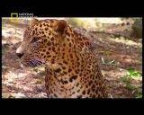 خطرناک ترین حیوانات هند 1
