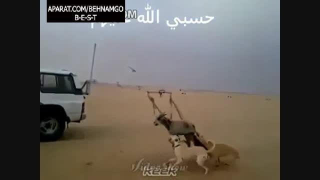 جنایت فجیع در عربستان(هشدار)!!