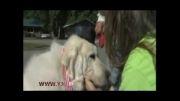 سگی که شهردار شد