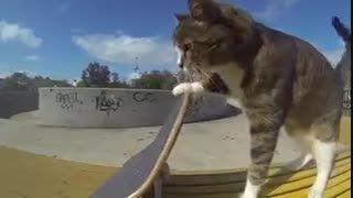 گربه ورزشکار.عجیب اما واقعی :))