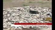 مرگ ۲ میلیون قطعه ماهی در هفته زمین پاک!
