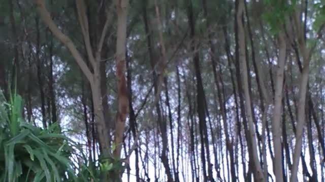 روحی در جاده جنگلی