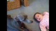 ناراحت شدن سگ به خاطر گریه کردن بچه,خیلی باحال