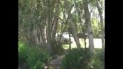 گردشگران تابستانی در منطقه نمونه گردشگری بولاخلار