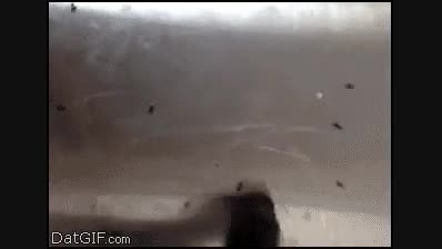 چگونه مورچه ها  را اذیت کنیم