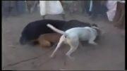پاکستان, نبرد خرس با سگها