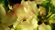 ویدئو زیبا از رویش گل ها،بسیار زیبا(HD)-قسمت پایانی