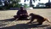 میمون عجیب!!!