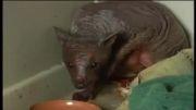 تازه ترین حیوان کشف شده جهان