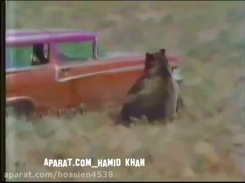 به هوش آمدن وحشیانه و هولناک خرس گریزلی