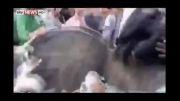 انداختن نماینده پارلمان درسطل آشغال توسط معترضان خشمگین