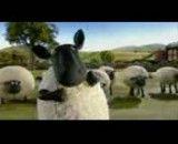 گوسفندان - بازیگوش