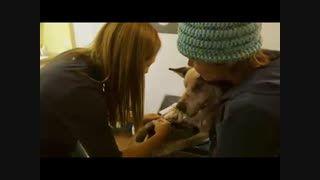 عاقبت ملاقات سگ با جوجه تیغی