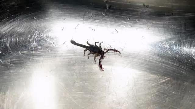 راههای جلوگیری از نفوذ عقرب به خانه ها منازل Scorpions