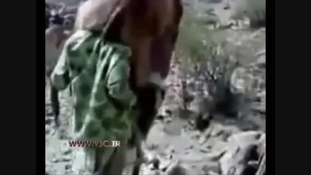 عجیب ترین شیوه قاچاق شتر به عربستان!!!