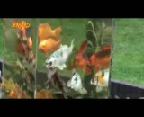 ابداع جالب برای زیبا سازی حوض