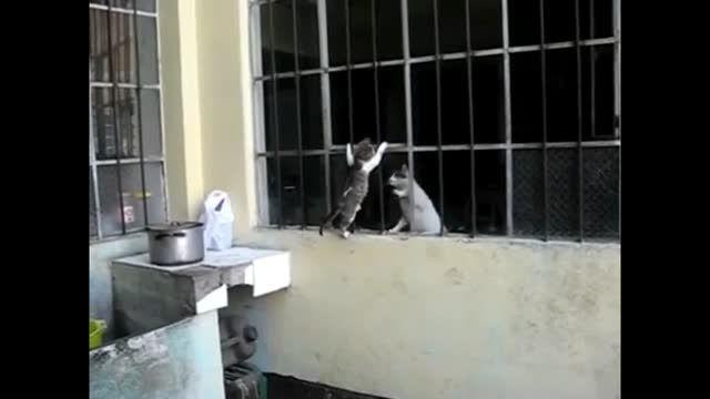 محبت مادر و فرزندی گربه ها
