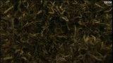چای سبز و پنهان کردن دوپینگ
