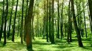 جاده های جنگلی
