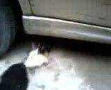 دعوای سگها سر پاکت شیر پگاه