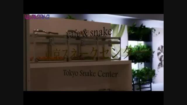 افتتاح کافی شاپ مارها در توکیو ژاپن+فیلم #گلچین صفاسا