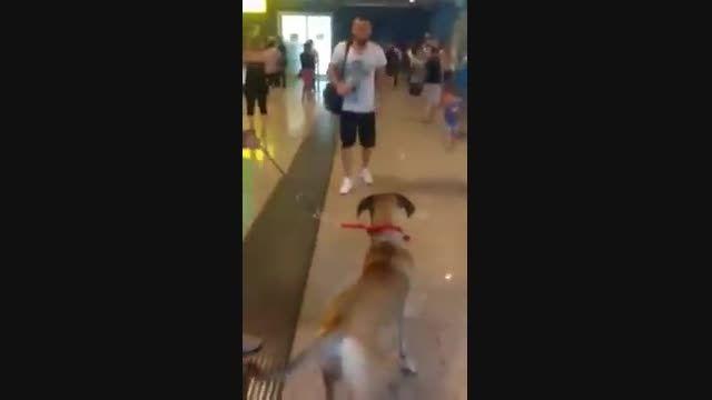 سگ وفادار به صاحب قبلیش
