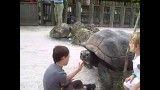 لاکپشت عظیم الجثه
