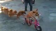 هنرنمایی سگها....