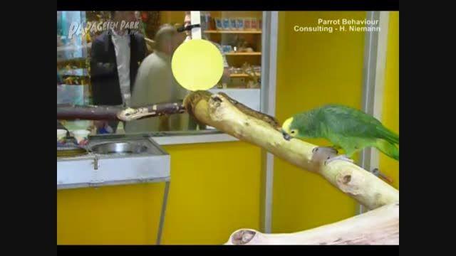 مرکز نگهداری و آموزش طوطی سانان در آلمان 2