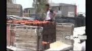پاسخ وزارت بهداشت درباره استفاده از سم در گوجه فرنگی