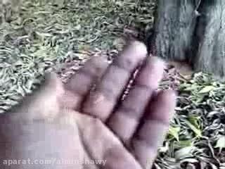 ریزه برگ و غبار روی برگ و گرده کنوکارپوس عامل تنگی نفس