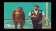 میمون شعبده باز