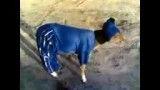 سگ استقلالی