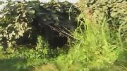 باغ کیوی یک هکتار