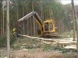 *سریعترین راه برای نابودی جنگلها*
