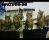 نمایش بسیار جالب گربه های واقعا دست آموز به همراه یه گربه ی شیطون و زیرک و به قو