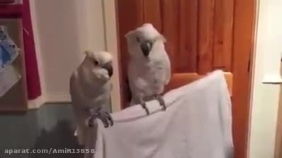رقصیدن باحال پرنده با اهنگ