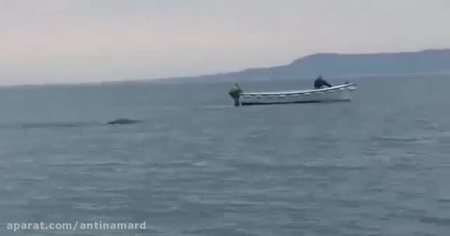 هیولای دریایی کاملاً واقعی!