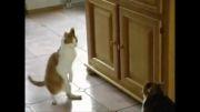 رقص گربه خردادیان