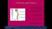 بیماریهای ستون فقرات و اندامها مانند انحراف ستون فقرات وزانو